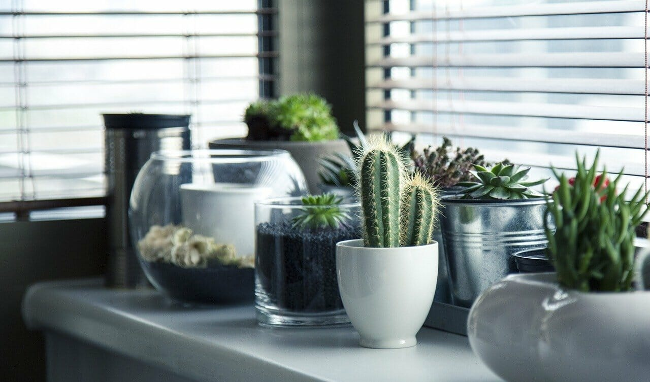 Learn plants that are great for apartments