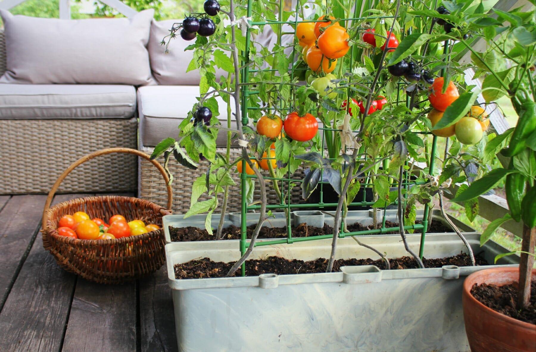 Grow an apartment garden for fresh veggies